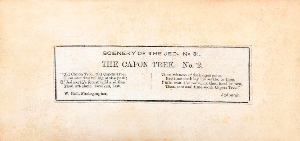 bell jedburgh capon tree rear